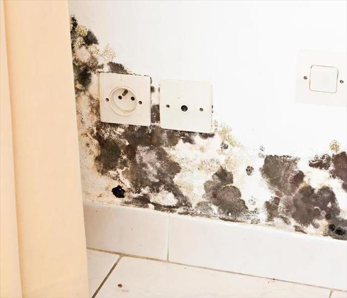 Mold Remediation Why We Talk About Mold Damage Remediation in Castle Rock Instead of Mold Removal