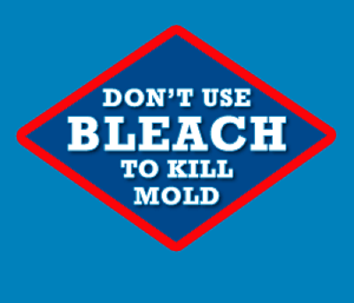 Mold Remediation Mold Remediation: Why Can't I Just Use Bleach?